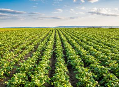 Το AFFINITY® 60 ME στην καλλιέργεια της Πατάτας