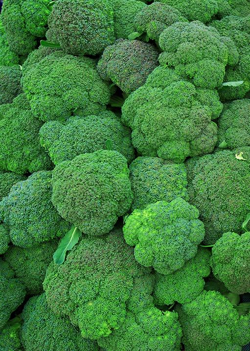 Verimark® 20SC Κατ' εξαίρεση έγκριση εναντίον της υλέμιας (Delia spp) στην καλλιέργεια του μπρόκολου